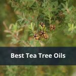 Best Tea Tree Oils